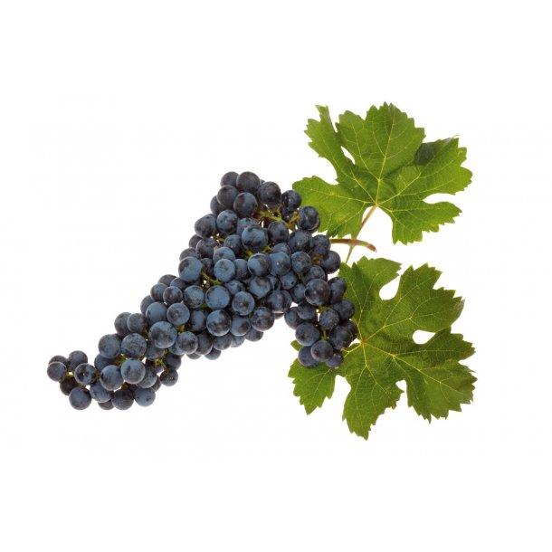 Premium Merlot Rødvin