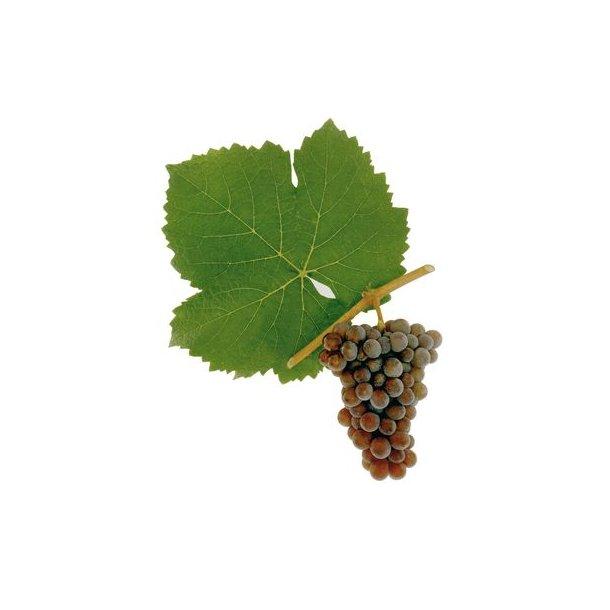 Premium Pinot Gris/Grigio Hvidvin